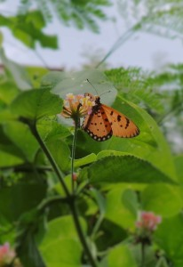 Butterflies 269