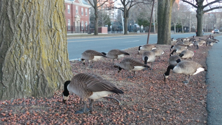 geese_20160222_021737
