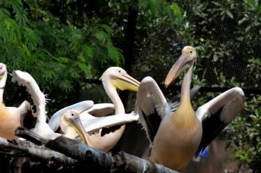 At Zoo_20151206_111212