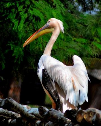Pelican_20151206_111147