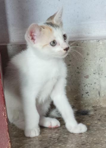 kittens-007