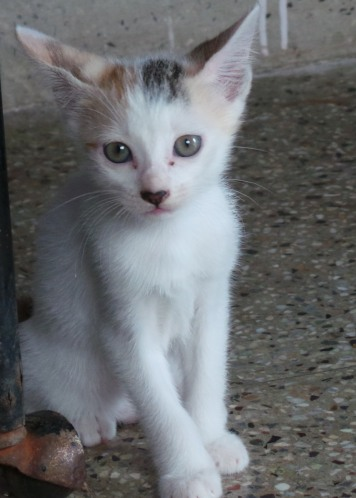 kittens-008