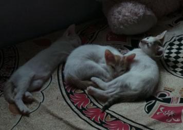 kittens-022