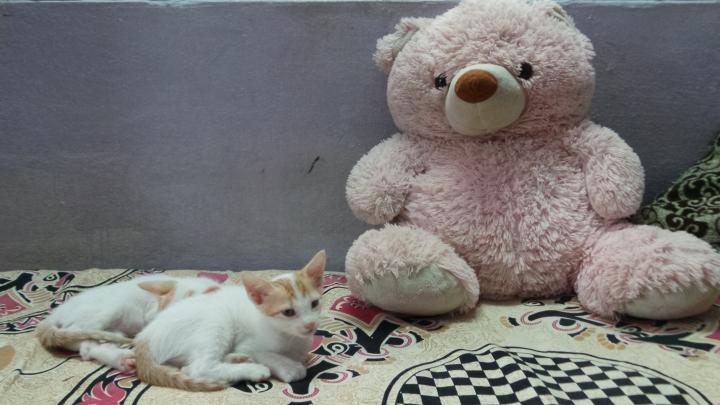 kittens-023