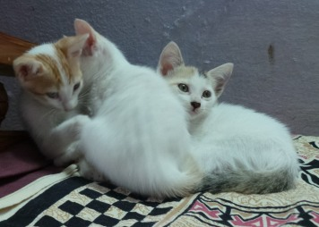kittens-027