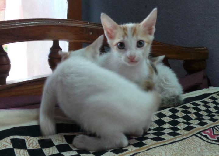 kittens-035
