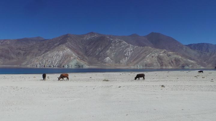 Ladakh-S 172