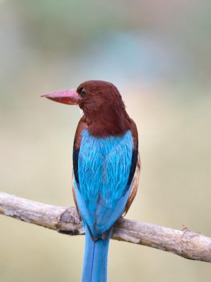 Birds 208_00025 (2)