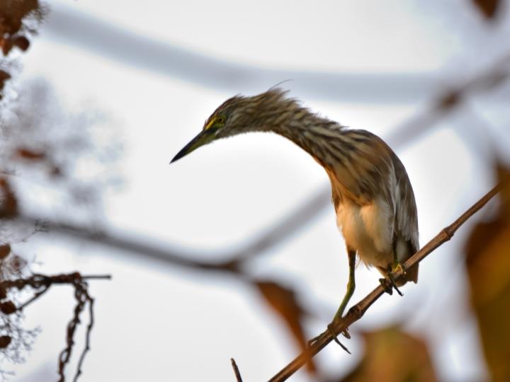 Birds 357_00001_01